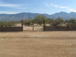 Decorative iron gate and fence in rusted rebar IF304-3 Rebar - Installed in W Tucson